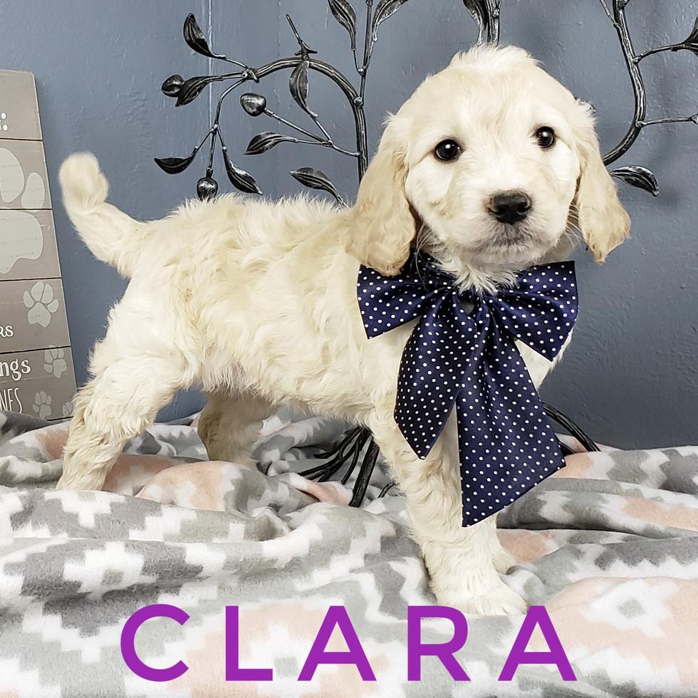 Clara (7).jpeg