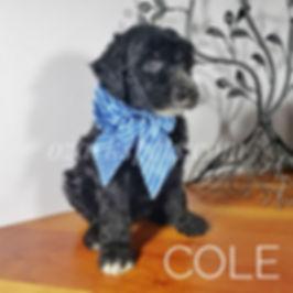 cole (2).jpg