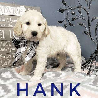 Hank (4).jpeg
