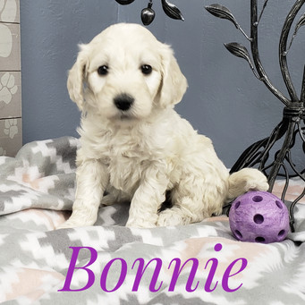 Bonnie (8).jpeg