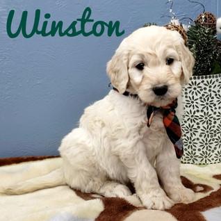 Winston (2).jpeg