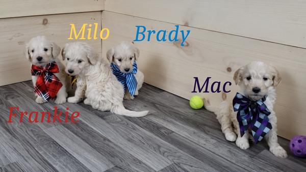 Frankie Milo Brady Mac (1).jpg