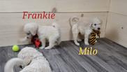 Frankie Milo.jpg