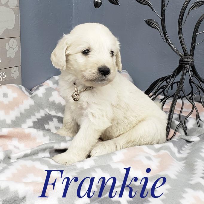 Frankie (3).jpeg