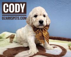 Cody (8).jpeg