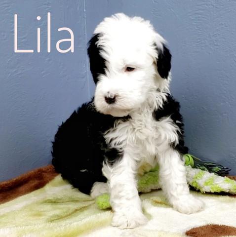 Lila (9).jpeg