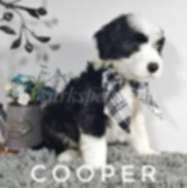 cooper (5).jpg