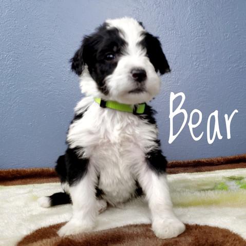 bear (4).jpeg