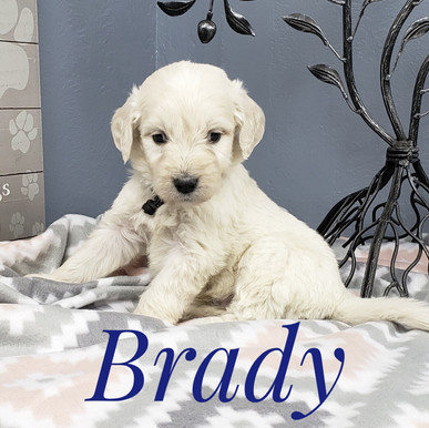Brady (3).jpeg