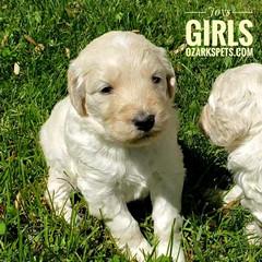 Joy Girls (9).jpeg