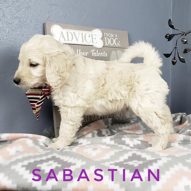 Sabastian (3).jpeg