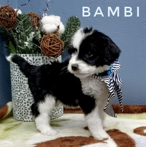 BAMBI (7).jpeg