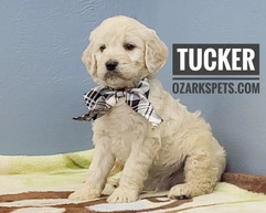 Tucker (3).jpeg