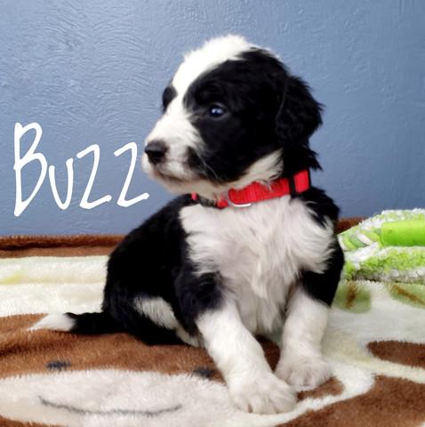 buzz (2).jpeg
