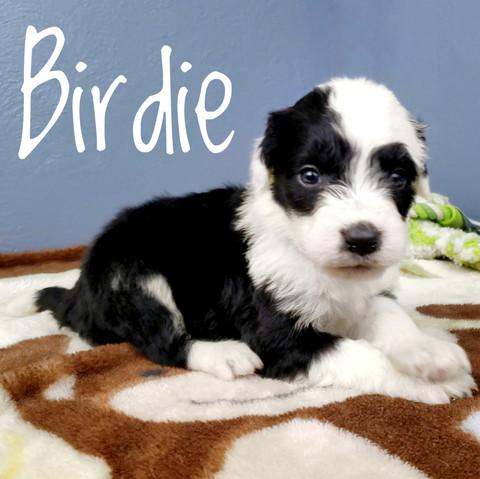 birdie (4).jpeg