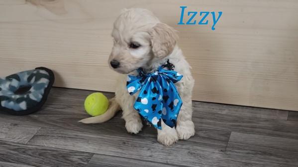 Izzy (3).jpg