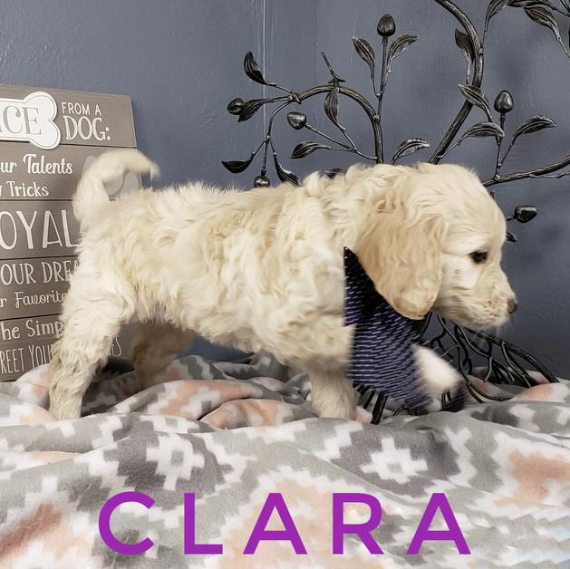 Clara (8).jpeg