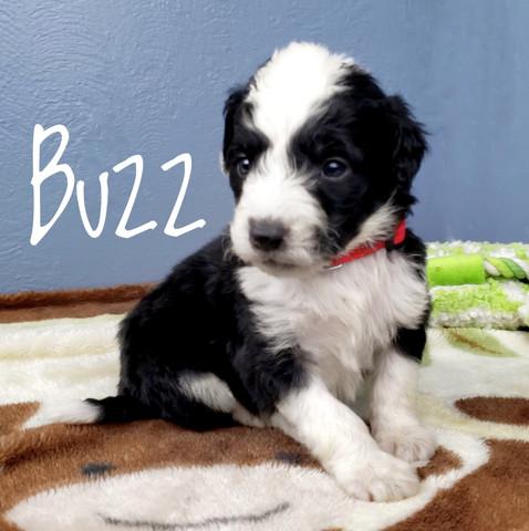 buzz (1).jpeg