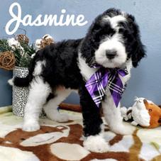 Jasmine (13).jpeg