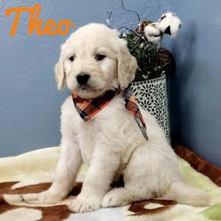 Theo (2).jpeg