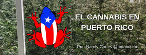 Cannalatino y El cannabis en Puerto Rico