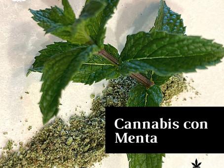 La Mejor combinación: Cannabis y Menta