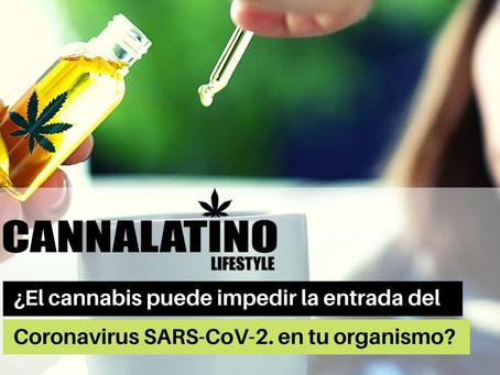 ¿El cannabis puede impedir la entrada del Coronavirus SARS-CoV-2. en tu organismo?