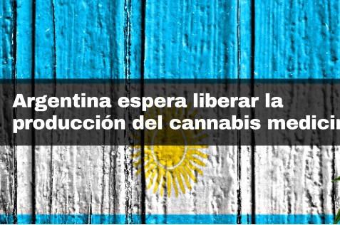 Argentina espera liberar la producción del cannabis medicinal.