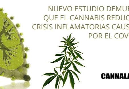 NUEVO ESTUDIO DEMUESTRA QUE EL CANNABIS REDUCE LAS CRISIS INFLAMATORIAS CAUSADAS POR EL COVID-19