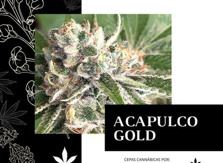 """""""ACAPULCO GOLD"""""""