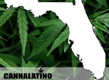 Aprende con CANNALATINO las reglas básicas del consumo de cannabis en USA - FLORIDA