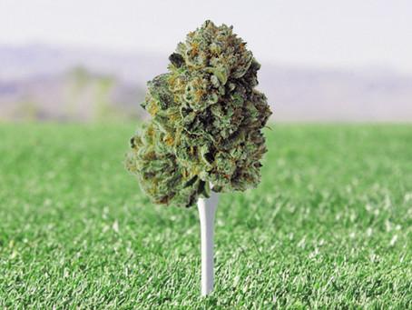 """""""The Laurel Rosebud"""", la mejor hierba de Colorado"""
