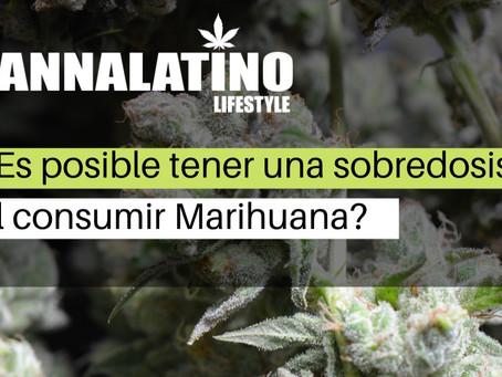 ¿Es posible tener una sobredosis al consumir Marihuana?
