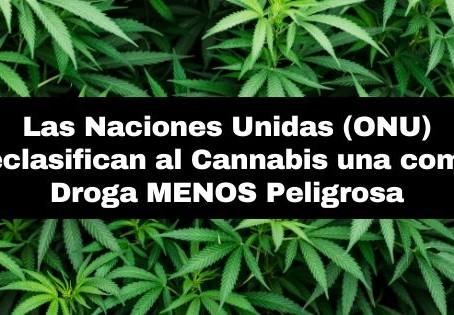 Las Naciones Unidas reclasifican al Cannabis como droga menos peligrosa