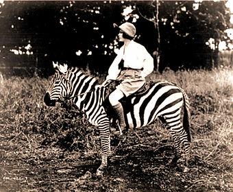 Elizabeth on Zebra.jpg