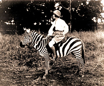 Elizabeth on Zebra.jpg