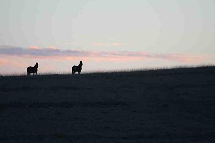chevaux_sur_couché_de_soleil_Causse.jpg
