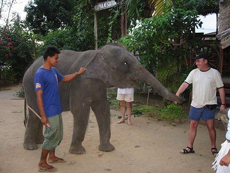 Elephants6.JPG.jpg