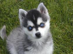 She had gorgeous double-blue eyes