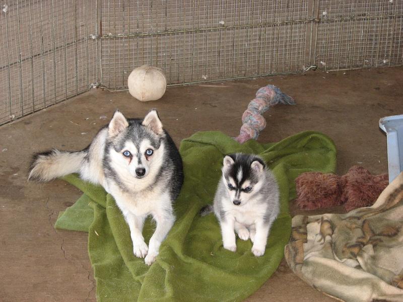 Popik & her puppy Tuvok