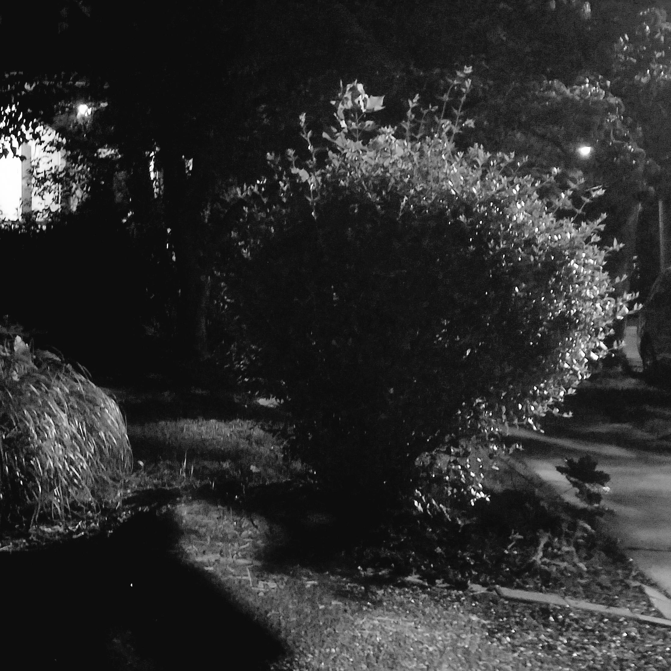 Spring Night, Patton Avenue