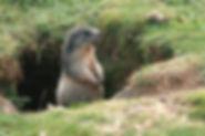 110825-Marmottes-057.jpg