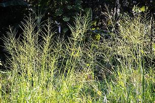 maana-leafs-213823_960_720.jpg