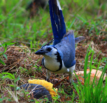 Mysterious Songbird Deaths Investigated