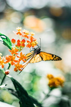 polinizador mariposa ecopil arte crea co