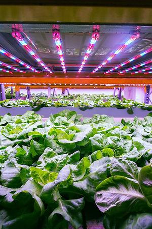 Vertical Farming Indoor Hidroponico