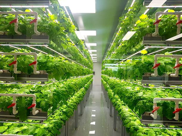 Plant vertical farms producing plant vac