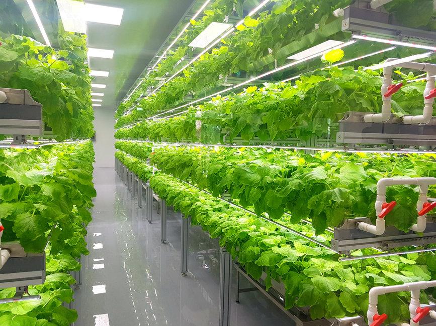 Cultivo Hidroponico Vertical Indoor