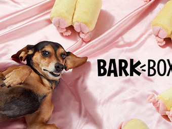 Subscribe to BarkBox and get a Pig Butt Toy with your purchase