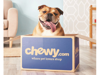 Chewy.com |  Dog & Cat Food 1st Order | American Journey, Tiny Tiger